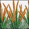 künstliches Pfeifenputzer Gras