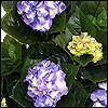 künstliche Blühpflanzen