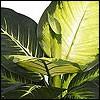 künstliche Topfpflanzen