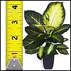Kunstpflanzen ab 60 bis 90cm