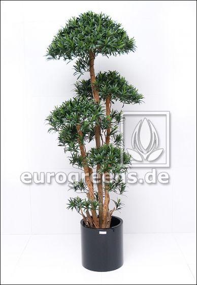Kunstpflanze Tempelbaum-Podocarpus ca.180cm