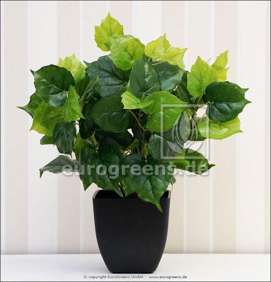 künstliche Cissus Pflanze mit Einsteckstab