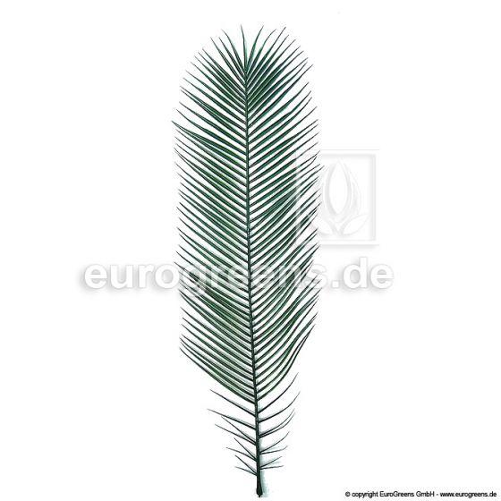 Plastik Phoenix-Palmenwedel 155cm