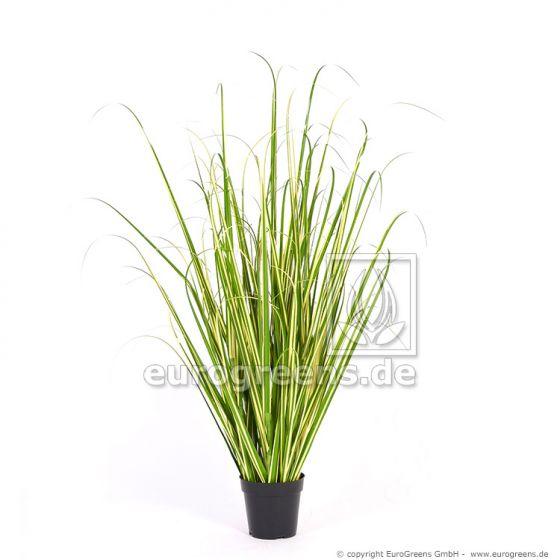 Varigated Gras getopft 110cm