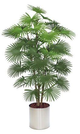 künstliche Fächerpalme ca.160-175cm