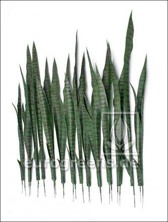 Künstliche Sansevieria Blattsets ca. 75-85cm
