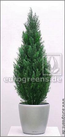 künstliche Zypresse Thuja ca. 65cm (mit Einsteckstab/ ungetopft)