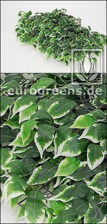 künstlicher Ficus-Exotica Zweig grün weiss ca. 60cm lang