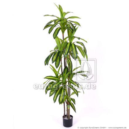 Kunstpflanze Dracaena Massangeana ca. 190-200cm
