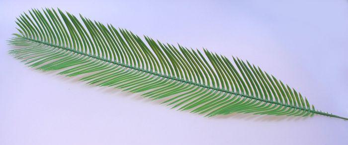 Plastik Cycas Palmenwedel ca.  80cm lang