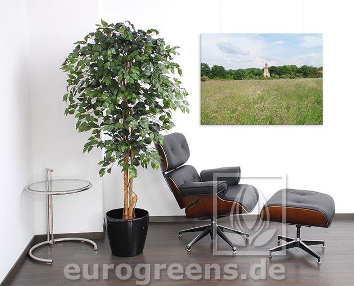 Naturstamm Ficus ca. 180-190cm grün