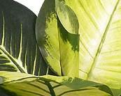 Kunstpflanzen von EuroGreens