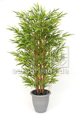Bambus mit Naturstamm